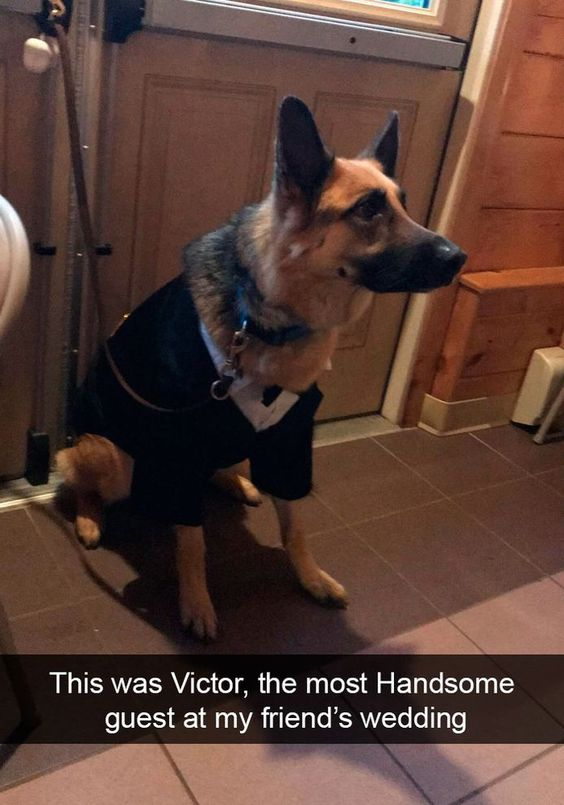 This was Victor, the most Handsome guest at my friend's wedding