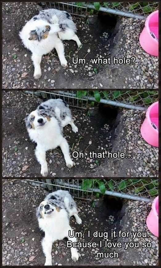 Um, what hole? Oh, that hole… Um, dug it for you. Because I love you so much.