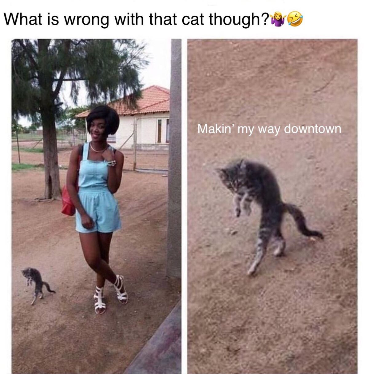 What is wrong with that cat though? Makin' my way downtown