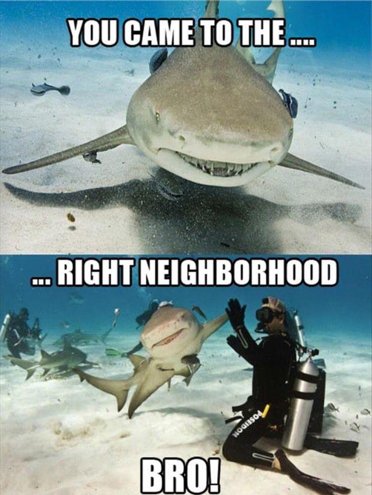 You came to the… …Right neighborhood. Bro!