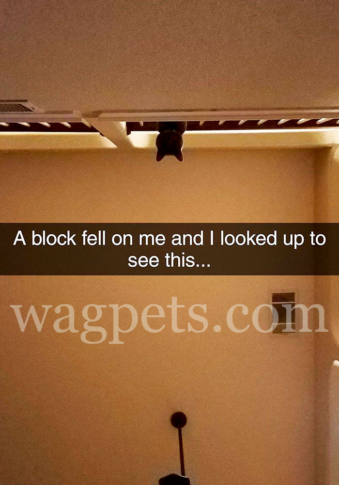 A block fell on me and I looked up to see this…