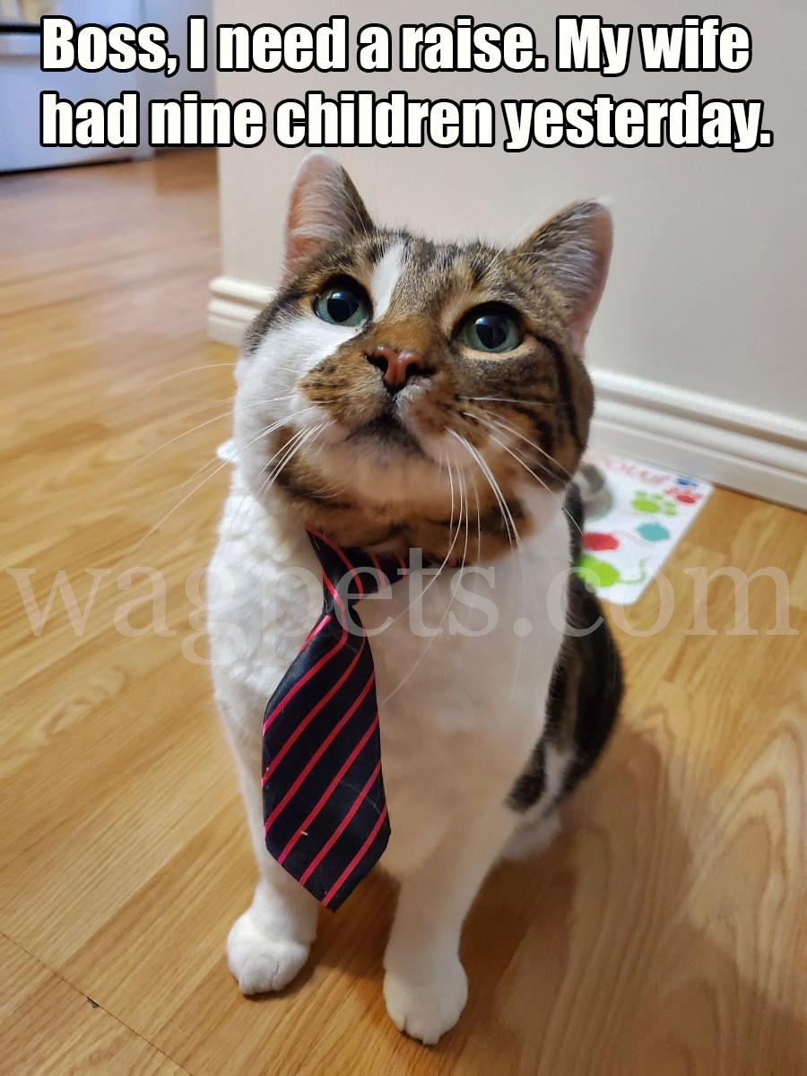 Boss, I need a raise. My wife had nine children yesterday.