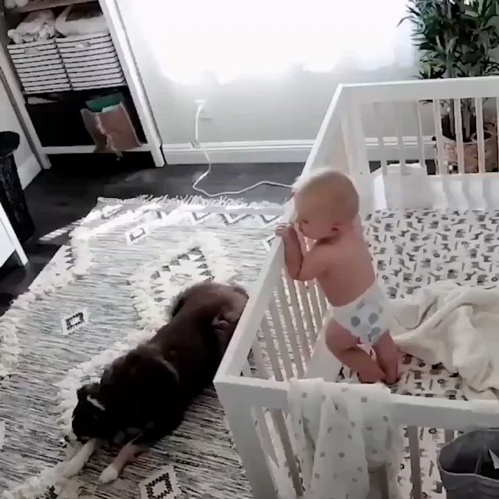 Dog can protect even a human baby