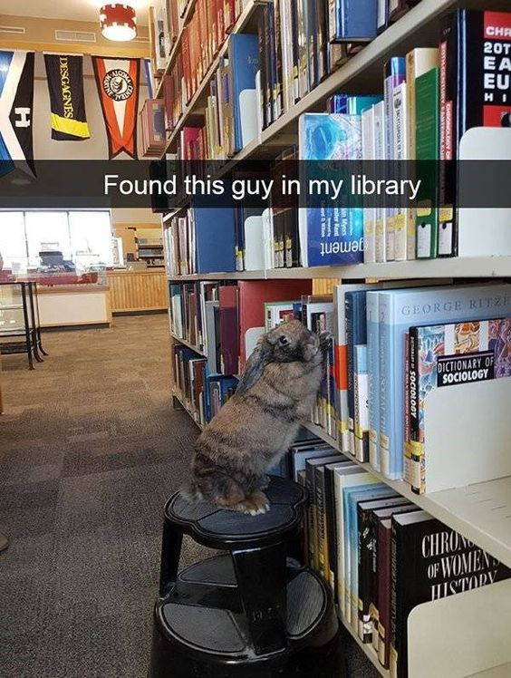 Found this guy in my library