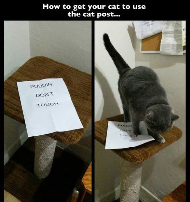 How to get your cat to use the cat post…