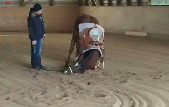 I cannot horse today. I haz the dumb.