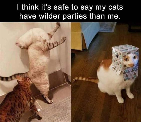 I think it's safe to say my cats have wilder parties than me.