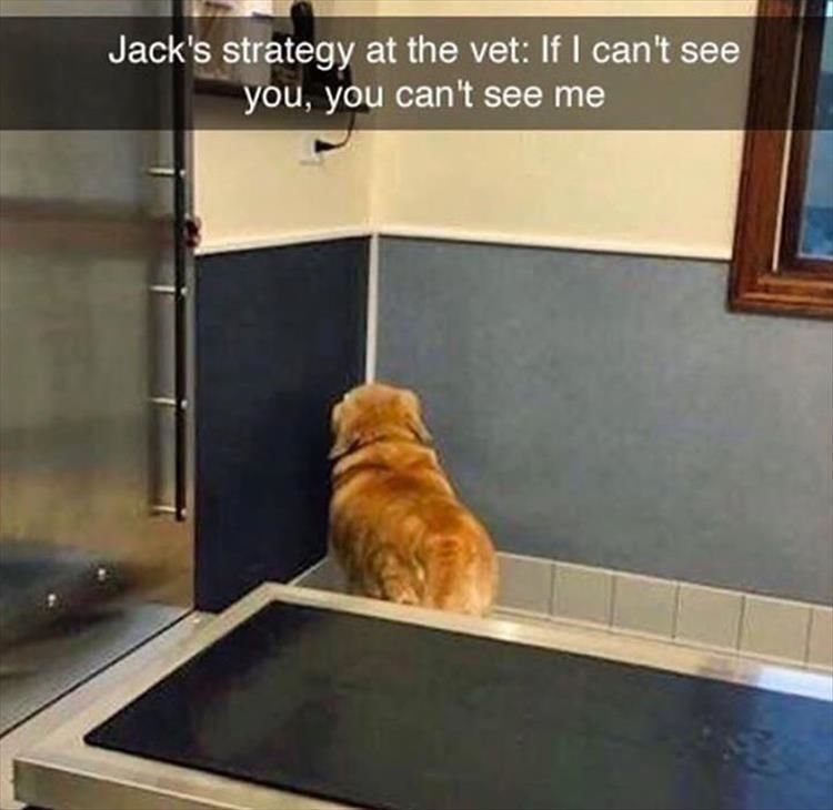 Jack's strategy at the vet: If I can't see you, you can't see me