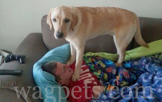 """My dogtor insisted on """"helping"""" when I was sick"""
