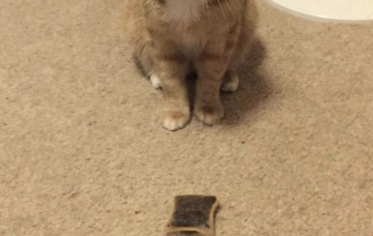 Some cats bring their human birds and mice… Oliver brings me teabags