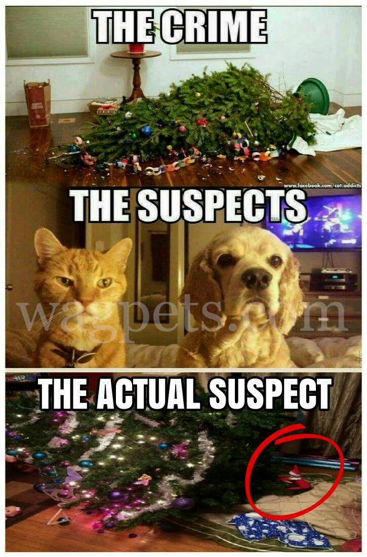 The crimes. The suspects. The actual suspect.