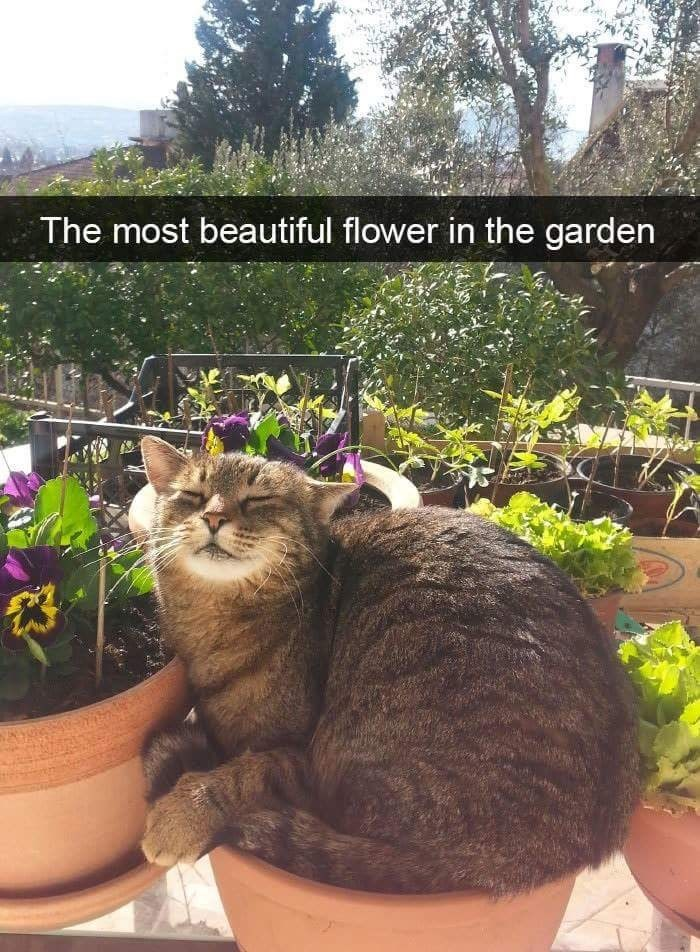 The most beautiful flower in the garden
