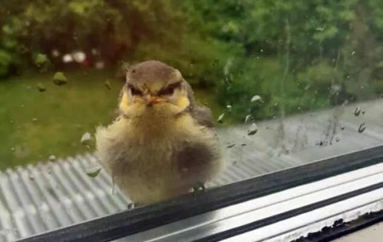 This little bird landed by my window and started at me like I murdered his whole family