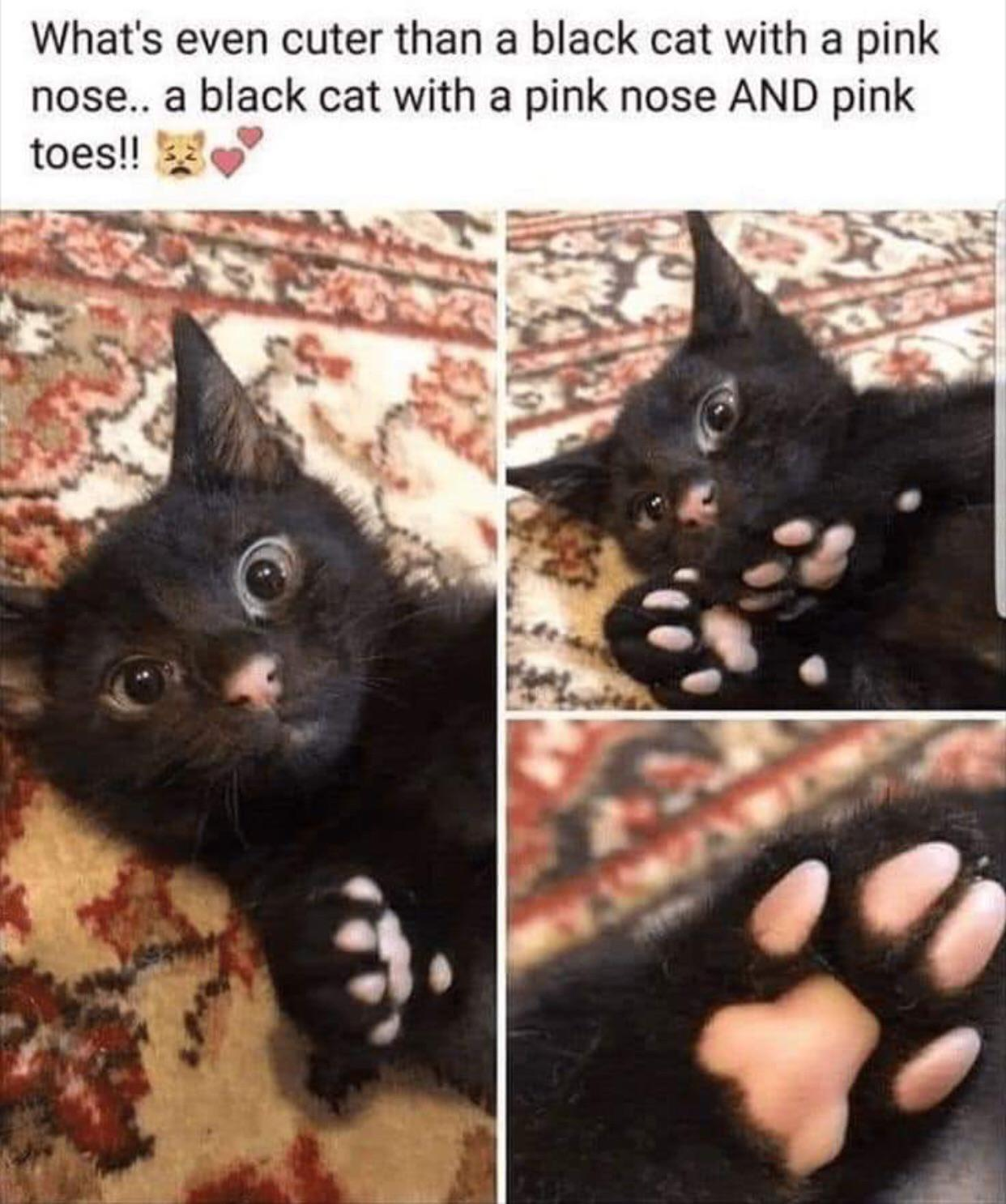 What's ever cuter than a black cat with a pink nose…