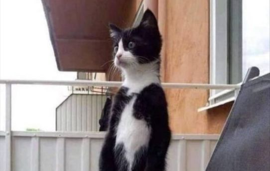 When you hear the neighbor coughing…