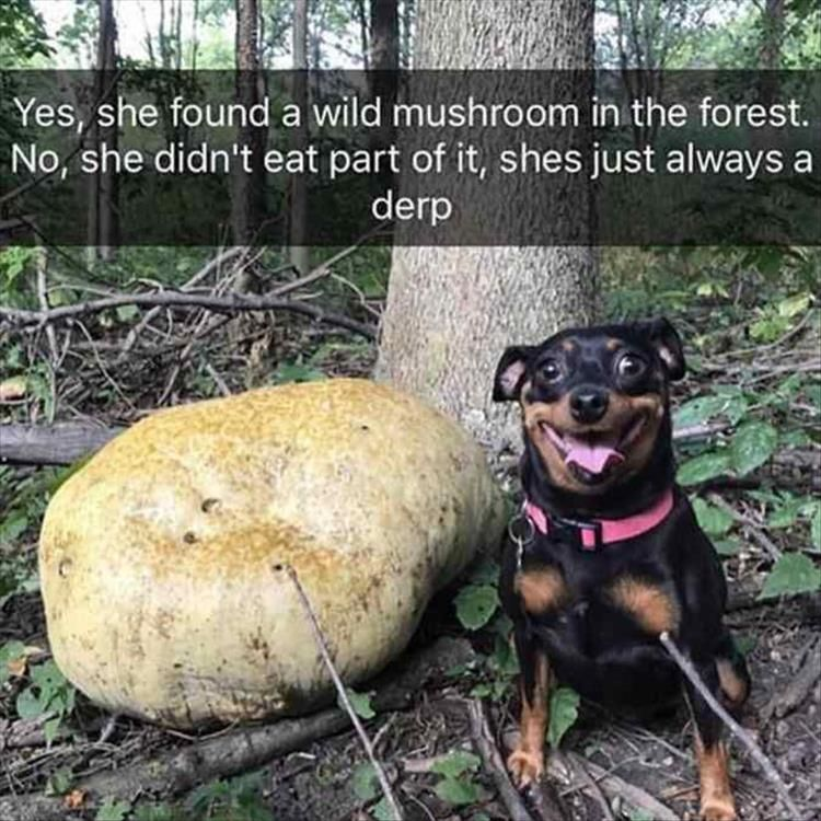Yes, she found a wild mushroom in the forest. No, she didn't eat part of it, she is just always a derp.