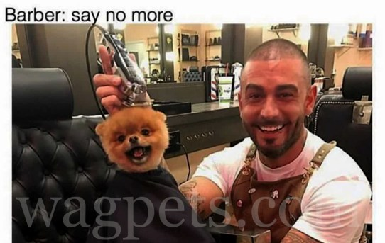Barber: what do you want? Him: to be a good boy Barber: say no more