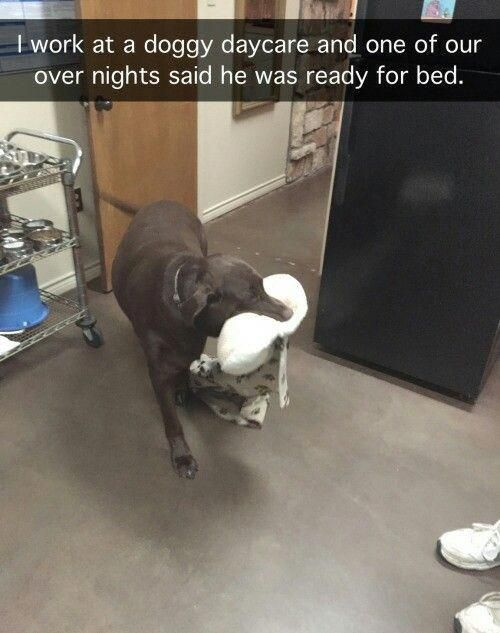 I work at a doggy daycare and one of our over nights said he was ready for bed.
