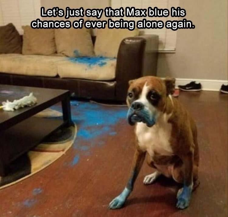 Let's just say that Max blue his chances of ever being along again.