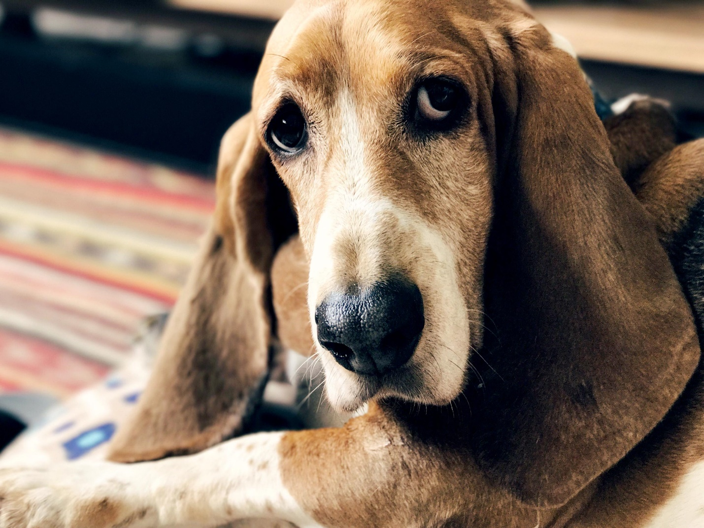The Best Medium Breeds for Apartments