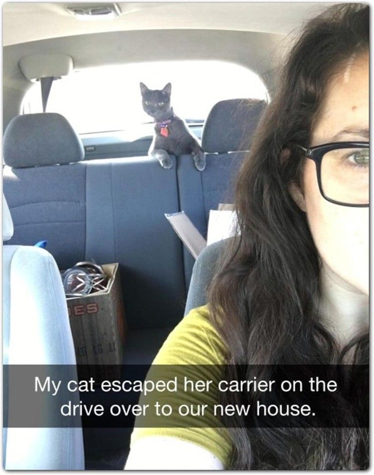 My cat escaped her carrier on the drive over to our new house.