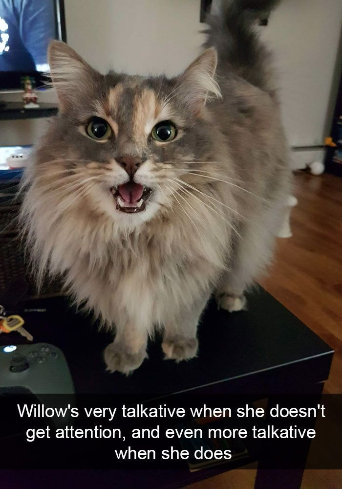 Willow's very talkative when she doesn't get attention, and even more talkative when she does