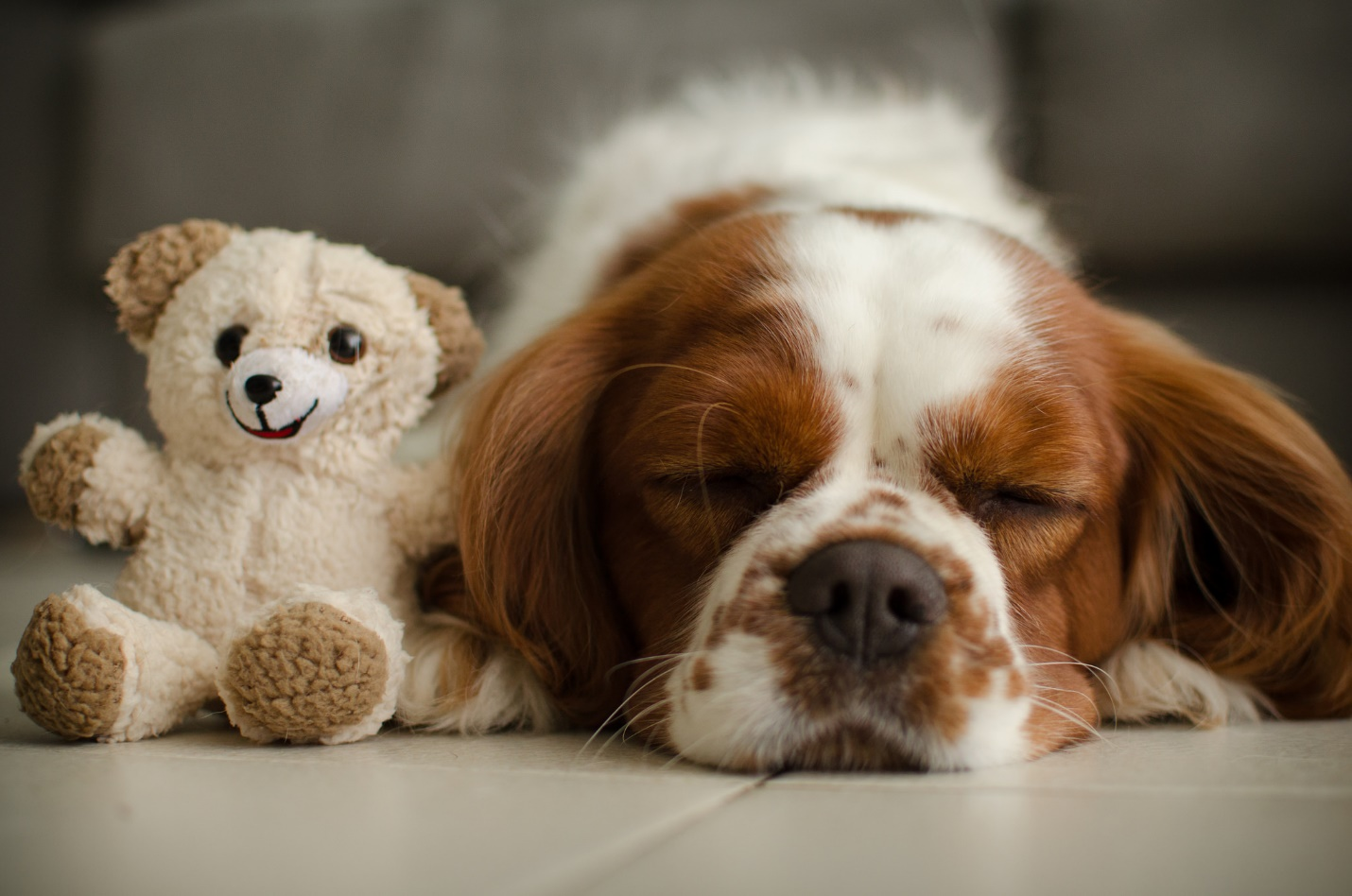 Best Quiet Dog Breeds for Apartments