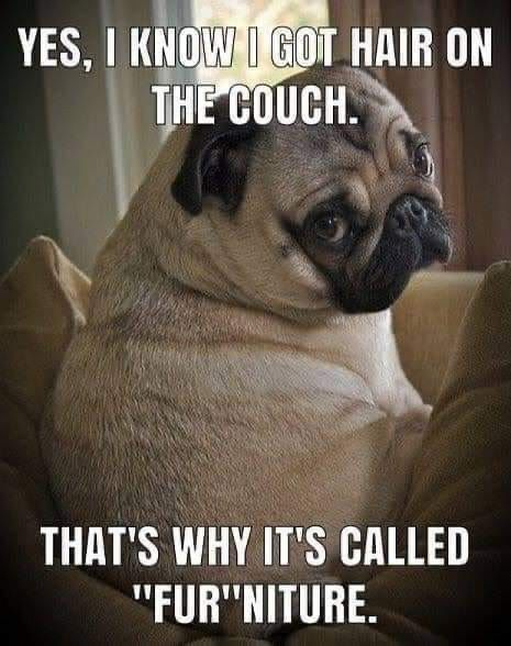 Yes, I know I got hair on the couch. That's why it's called 'fur'niture.
