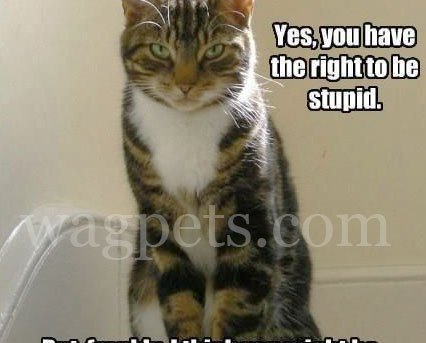Yes, you have the right to be stupid.
