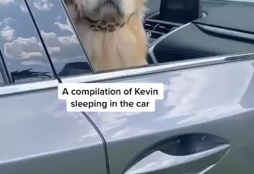 A compilation of Kevin sleeping in the car