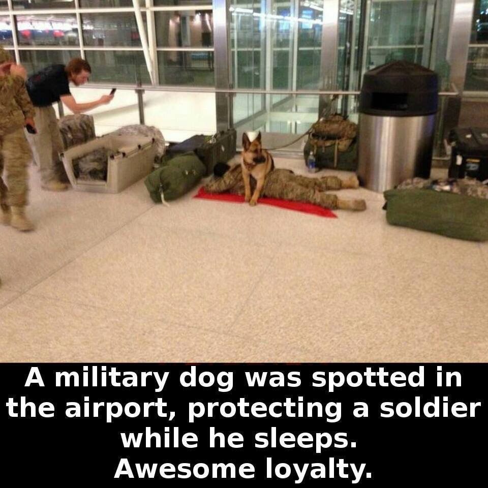 Awesome loyalty.