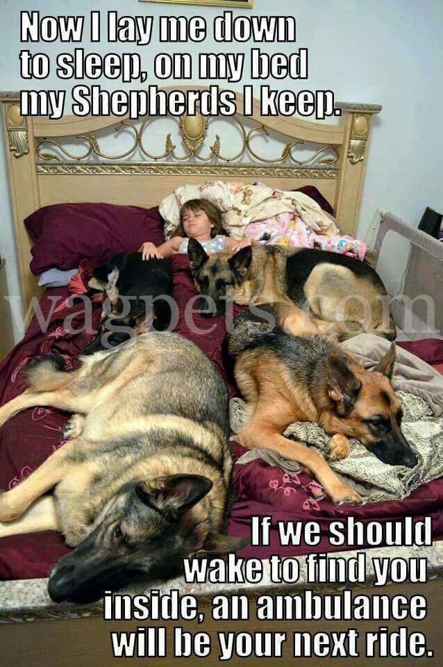 Now I lay me down to sleep, on my bed my Shepherds I keep.