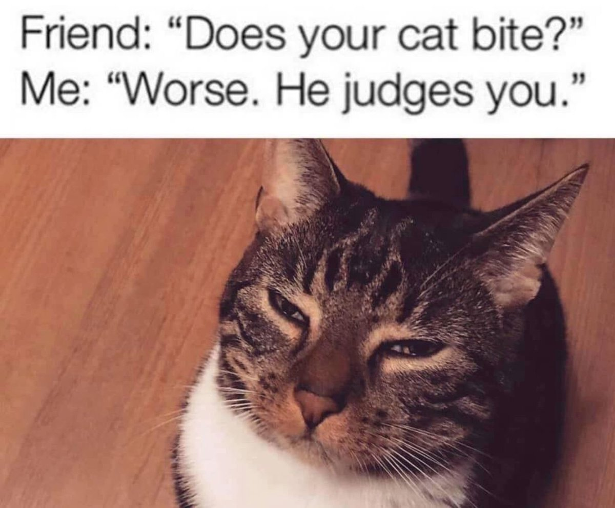 """Friend: """"Does your cat bite?"""" Me: """"Worse. He judges you."""""""