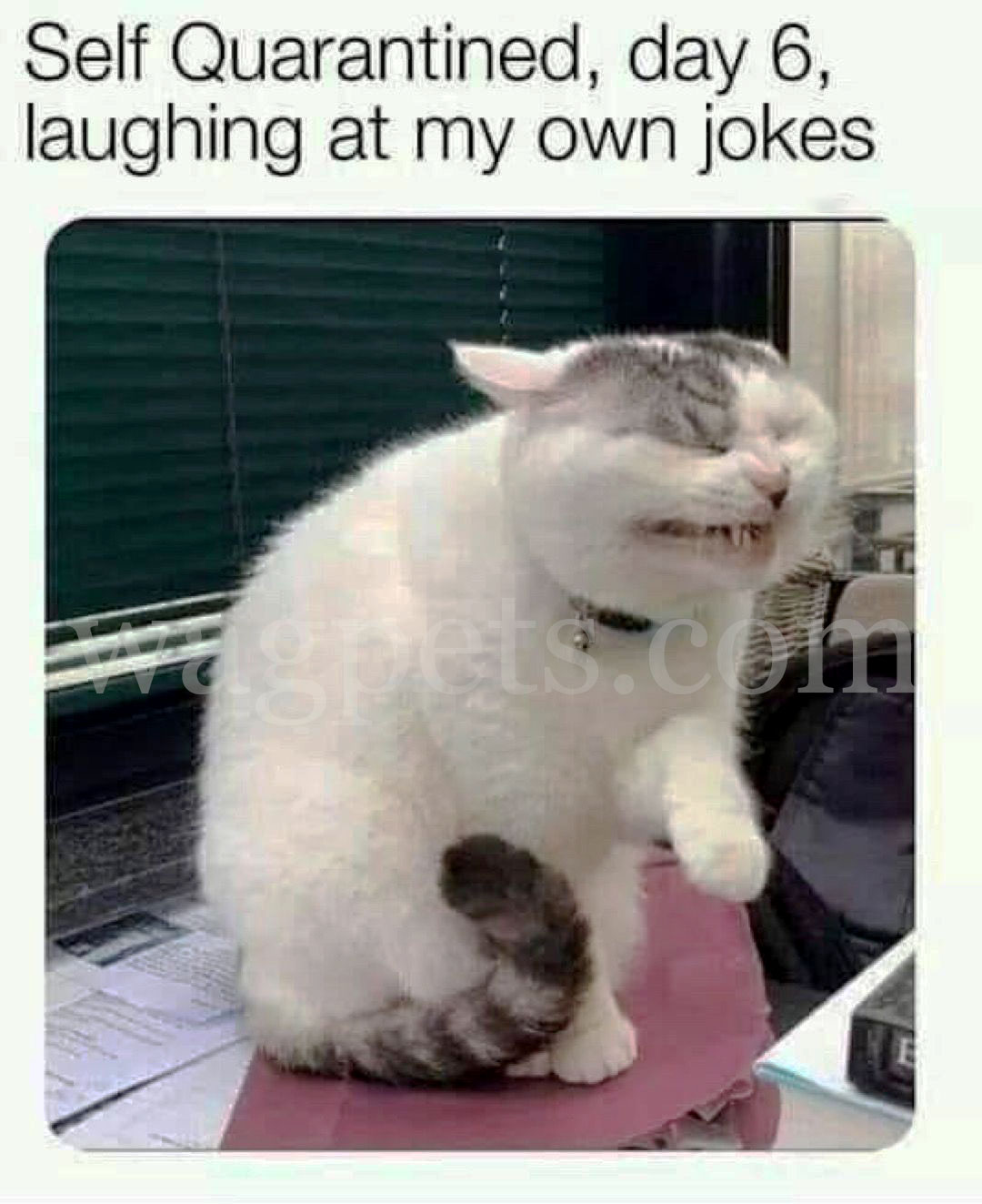 Self-Quarantined, day 6, laughing at my own jokes