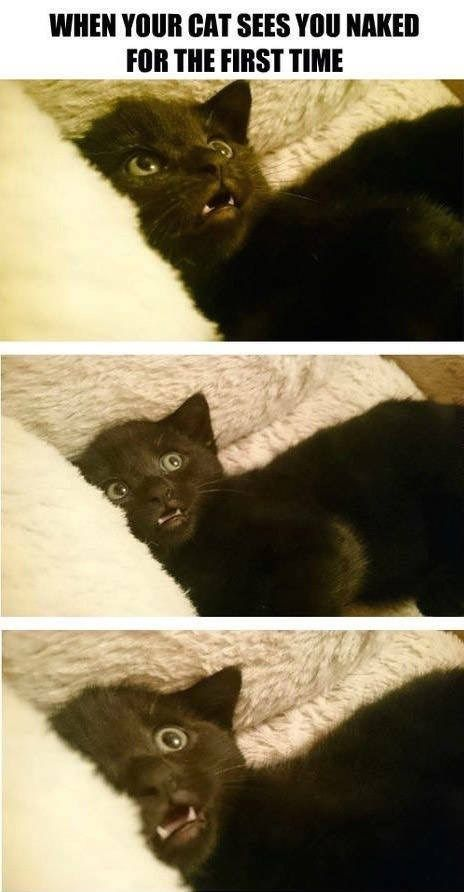 When your cat sees you naked for the first time