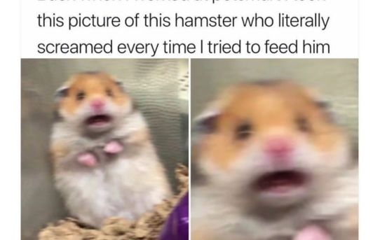 Back when I work at petsmart I took the picture of this hamster who literally screamed every time I tried to feed him