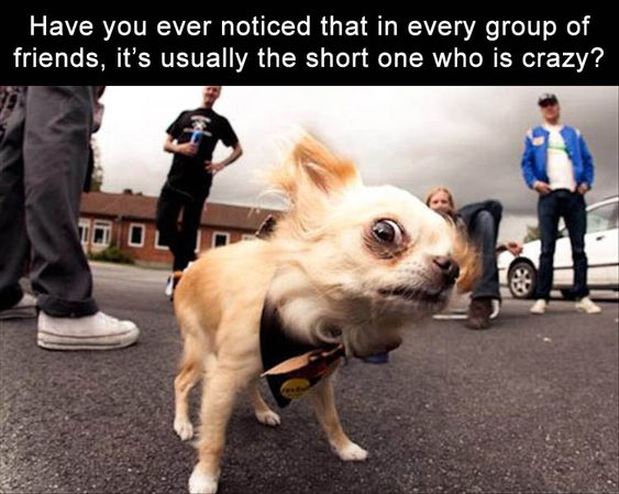 Have you ever noticed that in every group of friends, it's usually the short one who is crazy?
