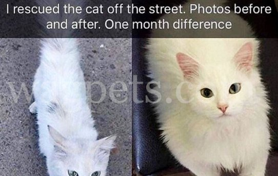 I rescued the cat off the street. Photos before and after. One month difference.