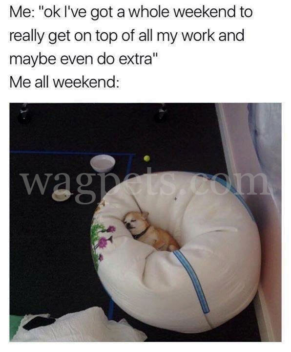 """Me: """"ok, I've got a whole weekend to really get on top of all my work and maybe even do extra"""" Me all weekend"""