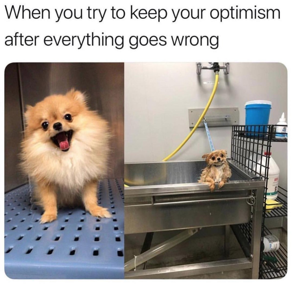 When you try to keep your optimism after everything goes wrong