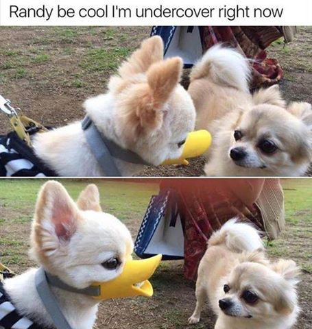 Randy be cool I'm undercover right now