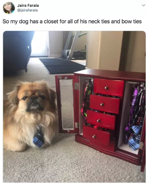 So my dog has a closet for all of his neck ties and bow ties