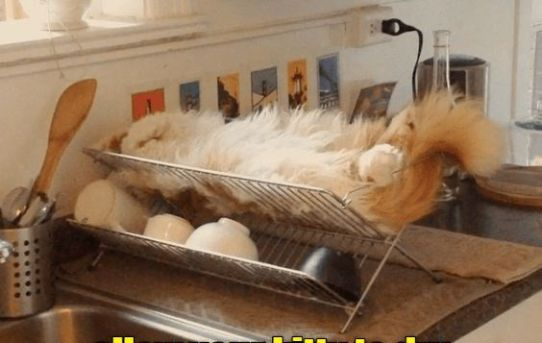 And after washing with a gentle soap and rinsing allow your kitty to dry before playing with him again