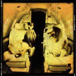 air travel pets
