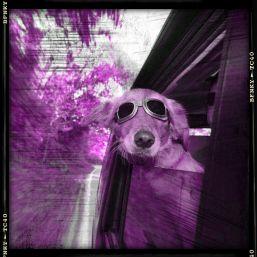 dog friendly travel by car