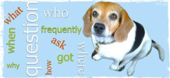 f a q at Wag The Dog UK