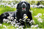 Caring for an Arthritic Dog or Cat