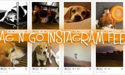 wag n go instagram feed