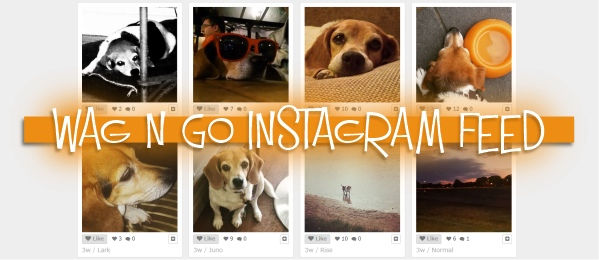 wag_n_go_instagram_feed