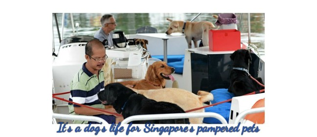 It's a dog's life for Singapore's pampered pets